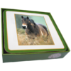 Faithful Friend Pack of 6 Horse Coasters (CC112) RRP £9.95 CLEARANCE XL £2