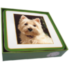 Faithful Friend Pack of 6 Dog Coasters (CC056) RRP £9.95 CLEARANCE XL £2