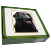 Faithful Friend Pack of 6 Dog Coasters (CC037) RRP £9.95 CLEARANCE XL £2