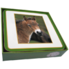 Faithful Friend Pack of 6 Horse Coasters (CC111) RRP £9.95 CLEARANCE XL £2