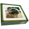 Faithful Friend Pack of 6 Dog Coasters (CC015) RRP £9.95 CLEARANCE XL £2