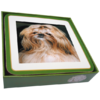Faithful Friend Pack of 6 Dog Coasters (CC050) RRP £9.95 CLEARANCE XL £2