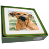 Faithful Friend Pack of 6 Dog Coasters (CC043) RRP £9.95 CLEARANCE XL £2
